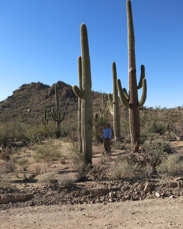 Me in the shadow of a Saguaro along the Bajada Loop road
