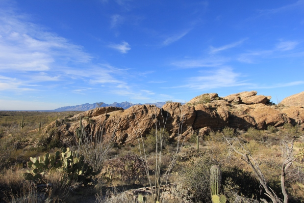 Javelina Rocks, on Cactus Forest Loop Drive