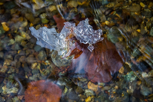 Leaf Frozen in Our Creek