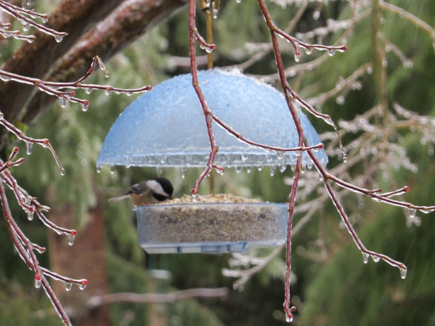 Icy_bird_feeder