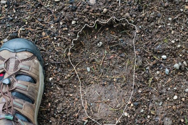 bear_foot_print3