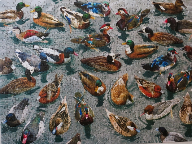 ducks_collection_puzzle