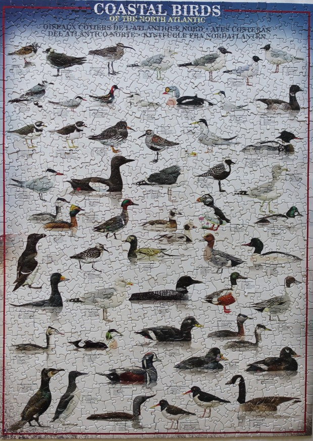 Costal_Birds