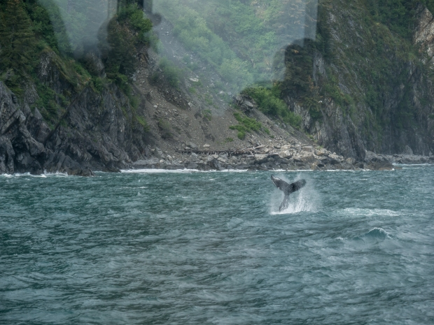 Whale Tail in Resurrection Bay