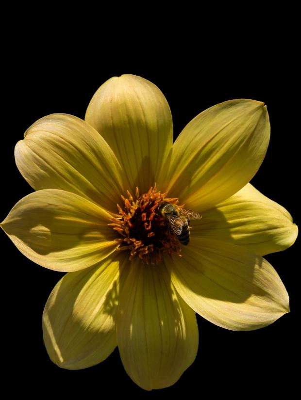 Bee_0893b