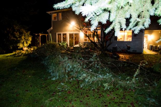 fallen_tree_02140