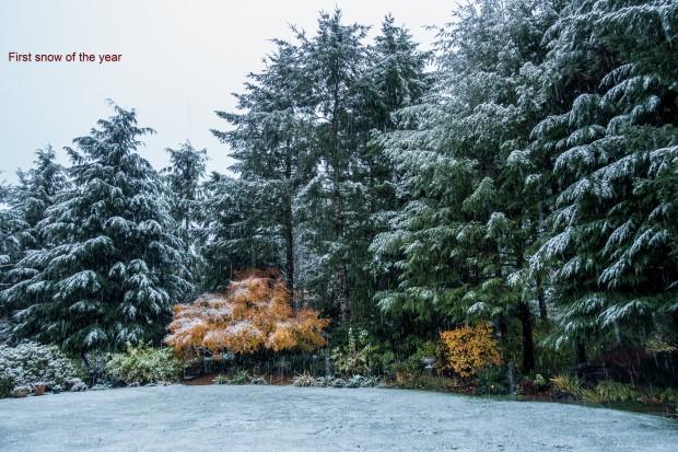 First_snow_2119_b