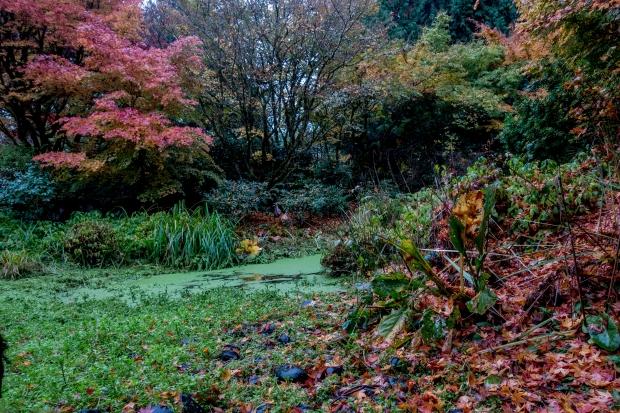 Yao Garden pond