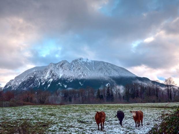 Mt_Si_w_cows_10154