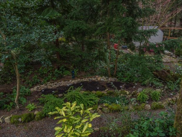 fern_garden_10610