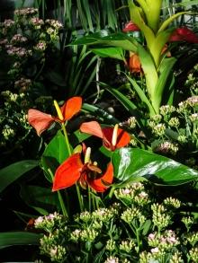 abq_botanic_garden_1000044