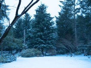 feb_3_snow