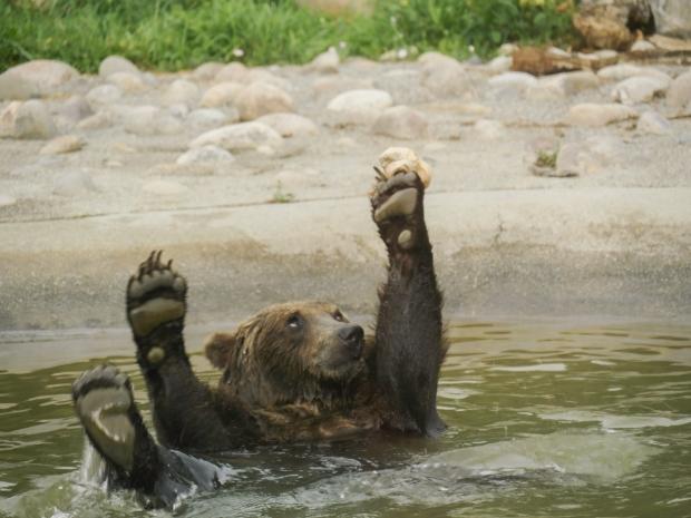 bear_1010365
